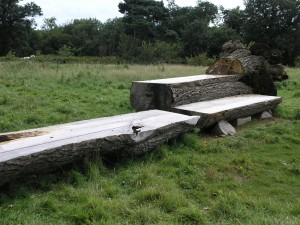Ash trunk viewing bench