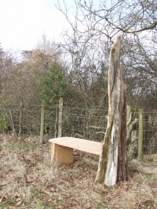 Macrocarpa woodland bench