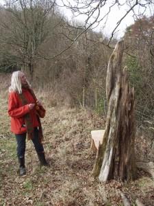 Macrocarpa woodland bench