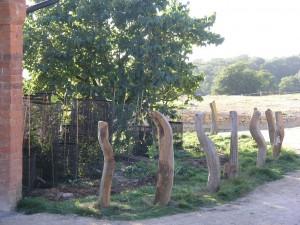 Oak bollards