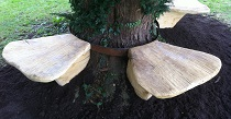 Toadstool oak tree seats