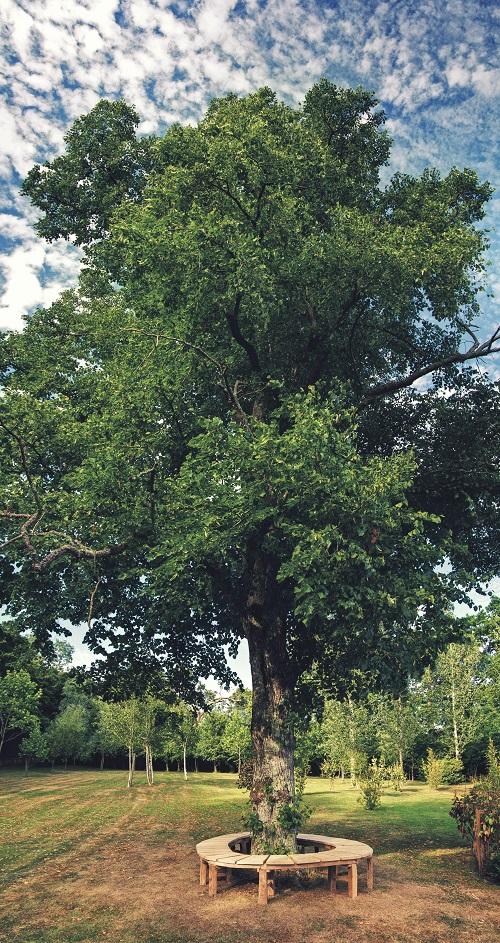 english oak circular organic tree bench 3