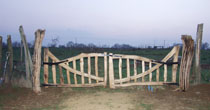 Curved wood entrance gate