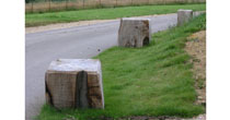 Windfallen beech bollards