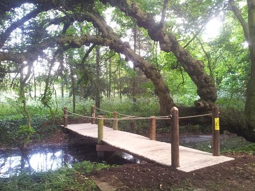 oak and telegraph pole bridge side