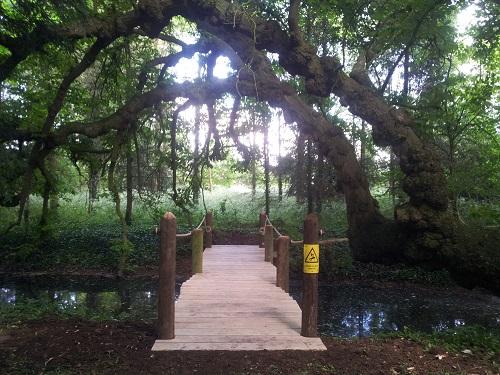 oak and telegraph pole bridge straight